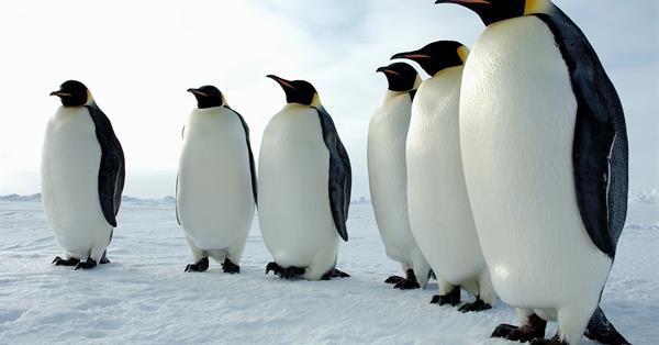 Google поделился информацией о статусе обновления Penguin