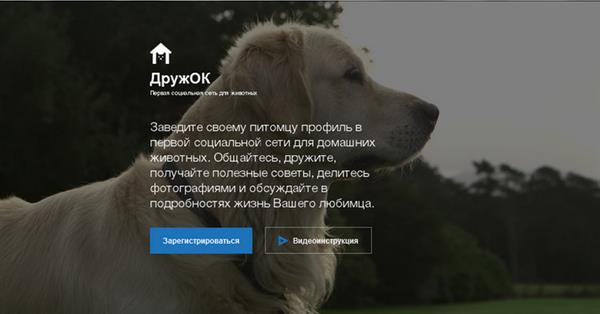 Одноклассники запускают социальную сеть для животных «ДружОК»