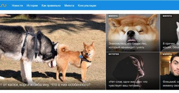 Mail.ru Group запустила медиапроект «Питомцы@Mail.ru»