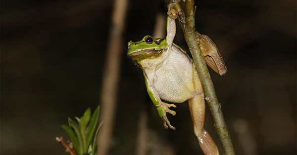 Screaming Frog обновила SEO Spider до версии 16.0