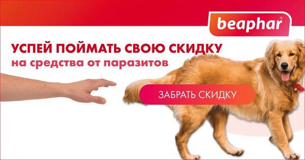 Как заставить охватную рекламную кампанию растить продажи. Кейс Beaphar.ru