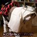 koshkazavr