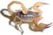 scorpion061181