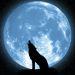 ratswolf