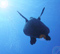 Turtle_Fly