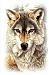 WerewolfCisco